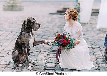 pow, cão, charming, loura, dá, esperto, mistress-bride