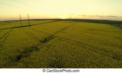 Power lines and agricultural field. Sunset