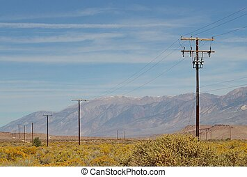 Power poles in the blooming desert