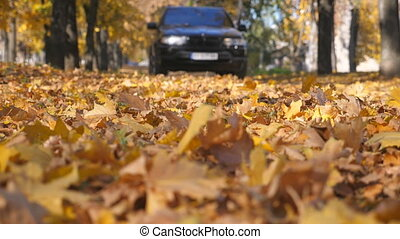 Powerful car driving on empty road over yellow fallen autumn leaves. Beautiful autumnal landscape. Blurred background. Slow motion