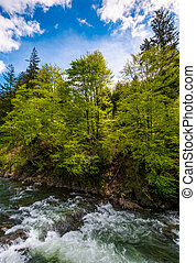 powerful mountain river and forest on a cliff. gorgeous...