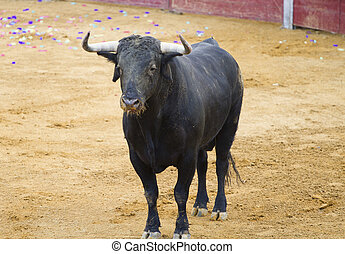 powerful Spanish bull in a bullfight. Matador in Madrid bullring