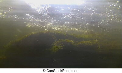 powerful underwater stream with bubbles and seaweed - bottom...
