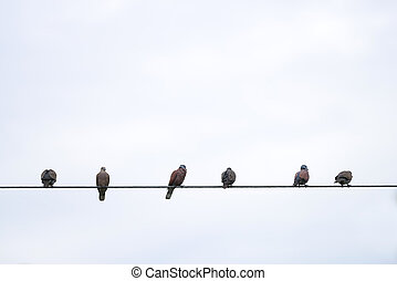 powerlines, aves, sentado