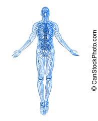 powstanie, rentgenowski, -, ciało