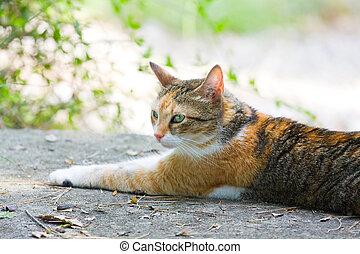 pozemek, ležící, šmrc devítiocasá kočka
