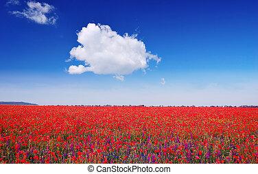 Ppoppy field