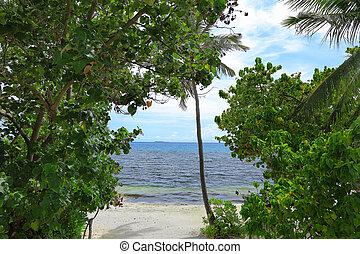 prächtig, ansicht, auf, kuesten, durch, grün, bäume., malediven, indische , ocean., schöne , hintergruende