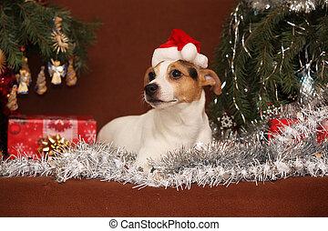 prächtig, steckfassung russell terrier, mit, nikolausmuetze,...