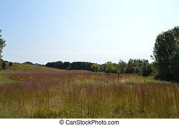 prärie, landschaftsbild