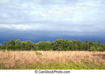 prärie, tallgrass, fruehjahr, himmelsgewölbe, rest, dramatisch