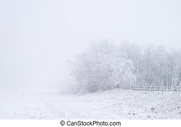 prærie, tåge