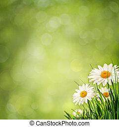 pré, beauté, eco, résumé, arrière-plans, fleurs