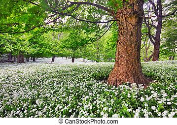 pré, beauté, forêt arbre, fleurs blanches, paysage