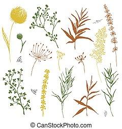 pré, isolé, leaves., ensemble, croquis, fleurs, champ, dessin, différent, botanique, sauvage, plants., branches