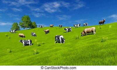 pré, paître, vert, 4k, vaches, laitage