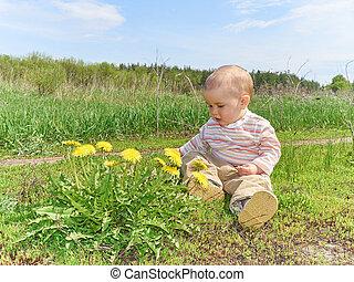 pré, séance, jaune, pissenlits, vert, bébé, fleurs