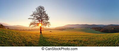 pré, soleil, -, arbre, coucher soleil, panorama, seul, brume