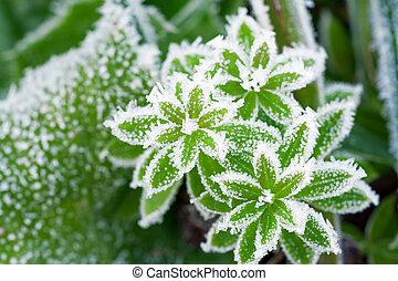 pré, sommet, neige vert, couvert, herbe, vue
