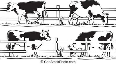 pré, vache, taureau
