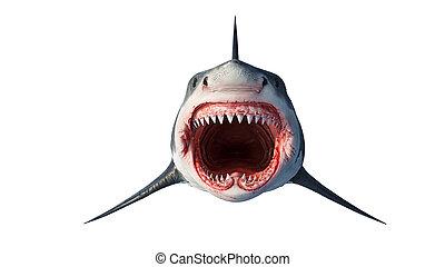 prédateur, vue, devant, marin, blanc, requin