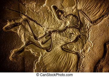 préhistorique, fossile, fond