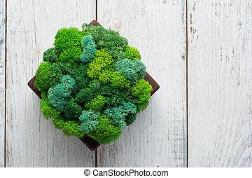 présentations, frais, organique, générique, espaces, moss., image, bureau, conception décorative, ou, vert, utilisé, brochures., concept, vivant, intérieur