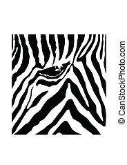 próbka, zebra