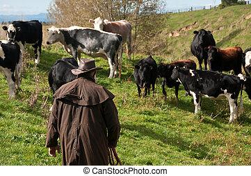 prüfung, bauernhoftiere, landwirt