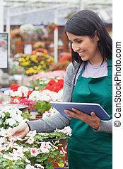 pracownik, wybierając, białe kwiecie, w, ogrodowy środek