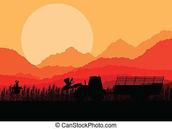 pracujący, kukurydziane pole, wektor, ziarno, tło, traktor