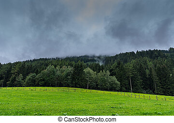 pradera, bosque verde, cerca, denso, rainclouds