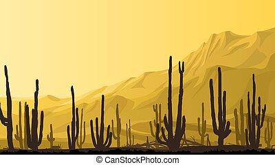 pradera, cactos, sunset.