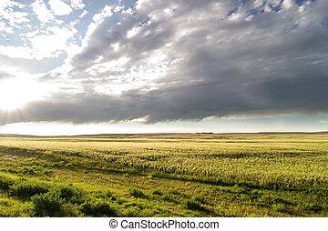 pradera, cielo, paisaje