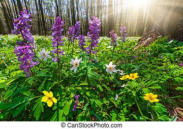 pradera, flores, en, primavera, bosque