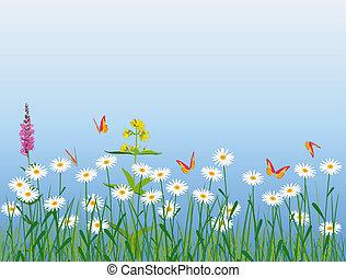 pradera, flores, y, mariposas