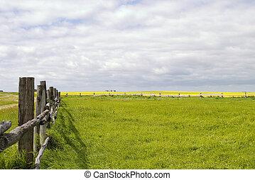 pradera, paisaje, -, cerca, línea