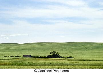 pradera, paisaje