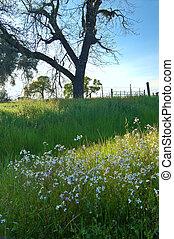 pradera, primavera