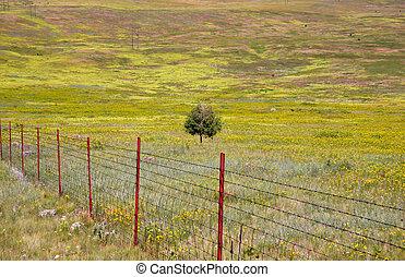 pradera, tierras
