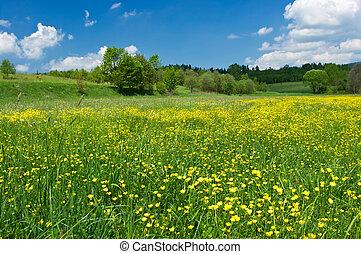 pradera verde, con, flores amarillas