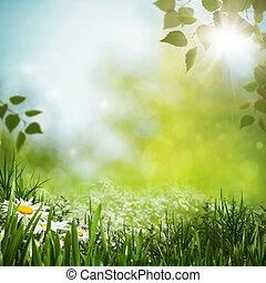 pradera verde, con, margarita, flowes, natural, fondos, para, su, diseño