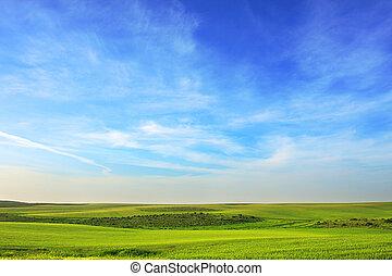pradera verde, debajo, el, sky.