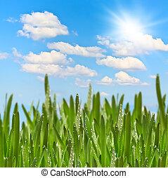 pradera verde, en, soleado, día de verano