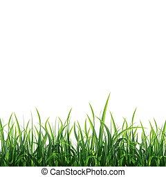 pradera verde, plano de fondo