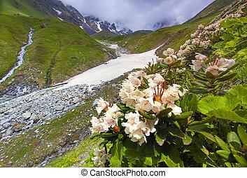 praderas alpinas, en, el, cáucaso, montañas