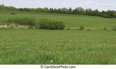 praderas, campos, llanuras, pastos