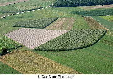 praderas, y, fields., aéreo, imagen