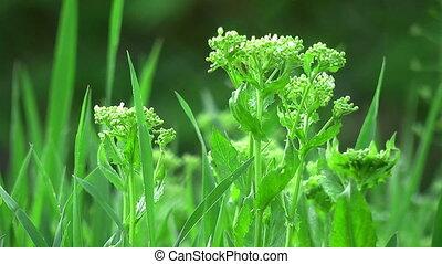 prado, chuva, vegetação