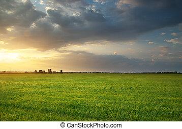 prado, de, wheat.